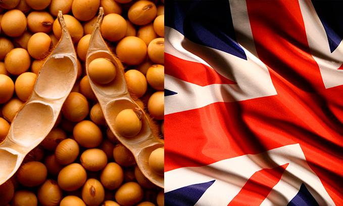 El caso de la soya transgénica y el supuesto aumento de alergias en el Reino Unido.
