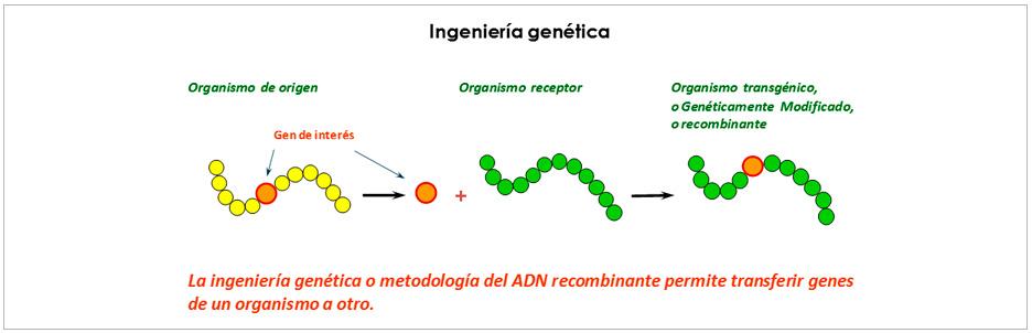 Worksheet. Biotecnologa tradicional y moderna  ChileBIO