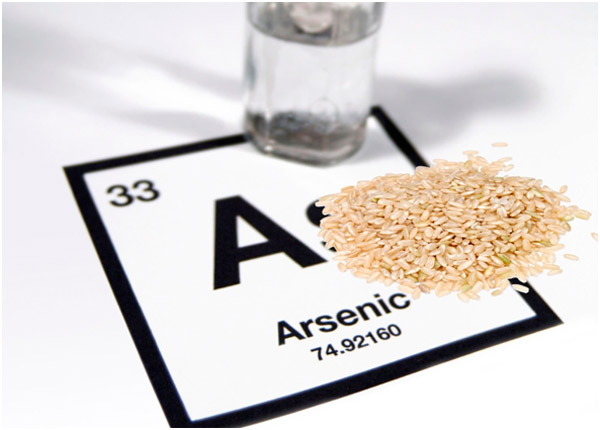 Desarrollarán plantas de arroz genéticamente modificadas que no acumulan arsénico del suelo