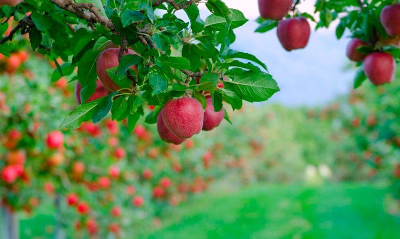 Un cambio genético agrega ramas a las plantas y podría aumentar los rendimientos agrícolas