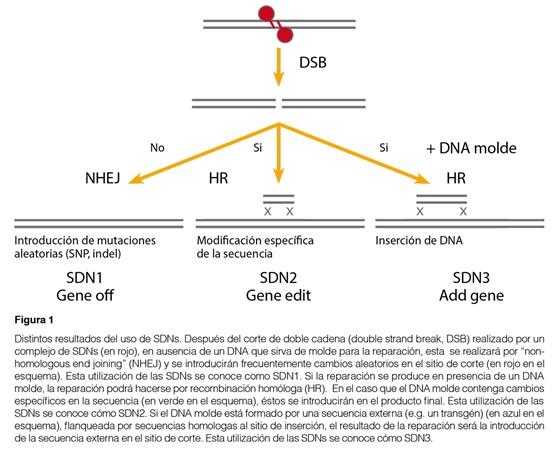 Distintos Resultados del uso de SNDs.