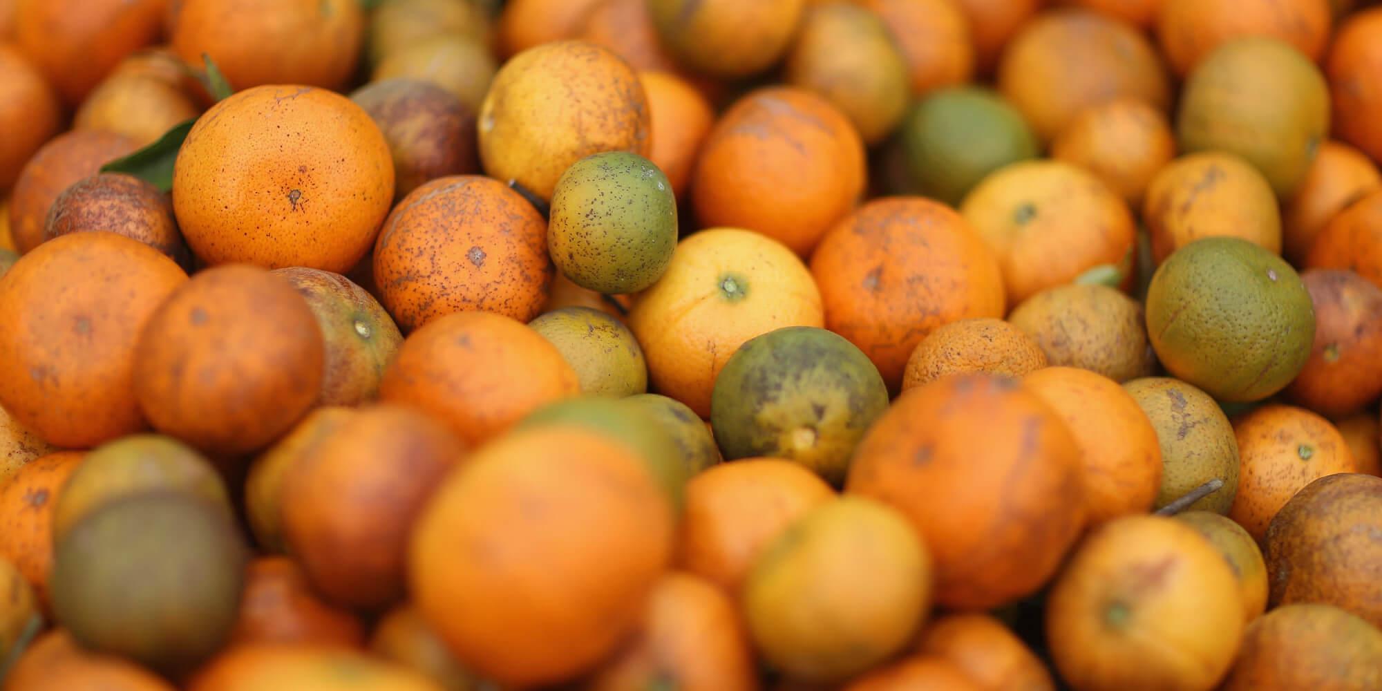 naranja transgénica