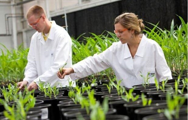 edición genética de cultivos