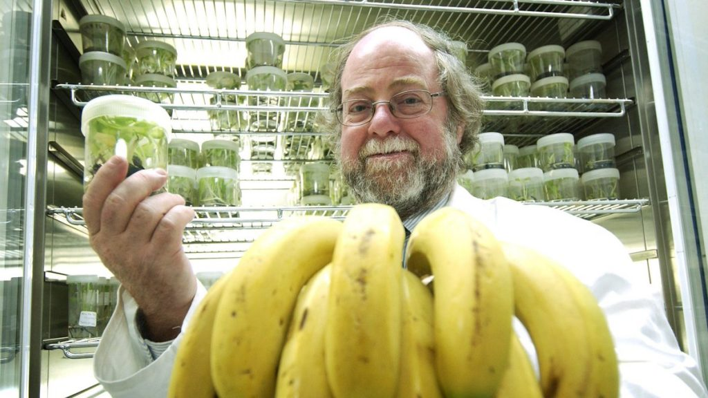 plátano resistente a hongo