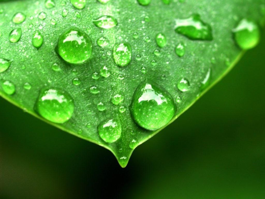 planta evaporación