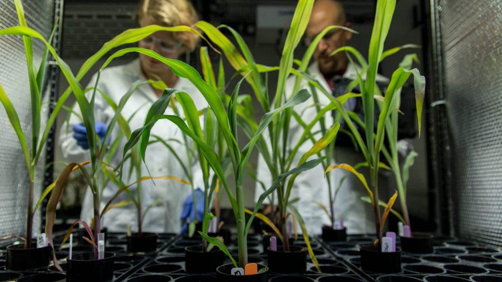 edición genética agrícola