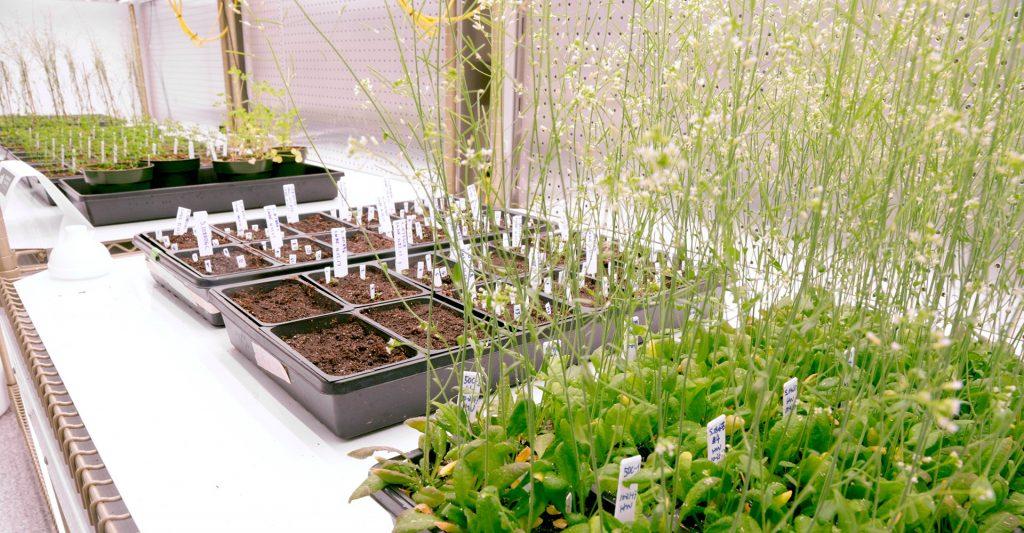 Instituto Salk Plantas
