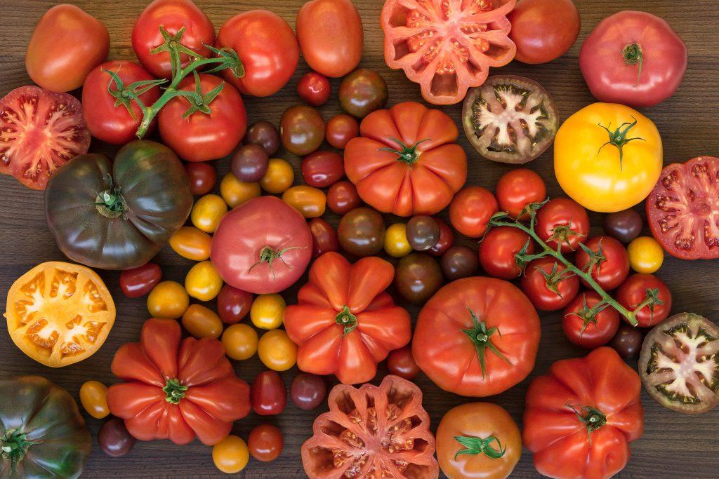 tomate resistente a sequía