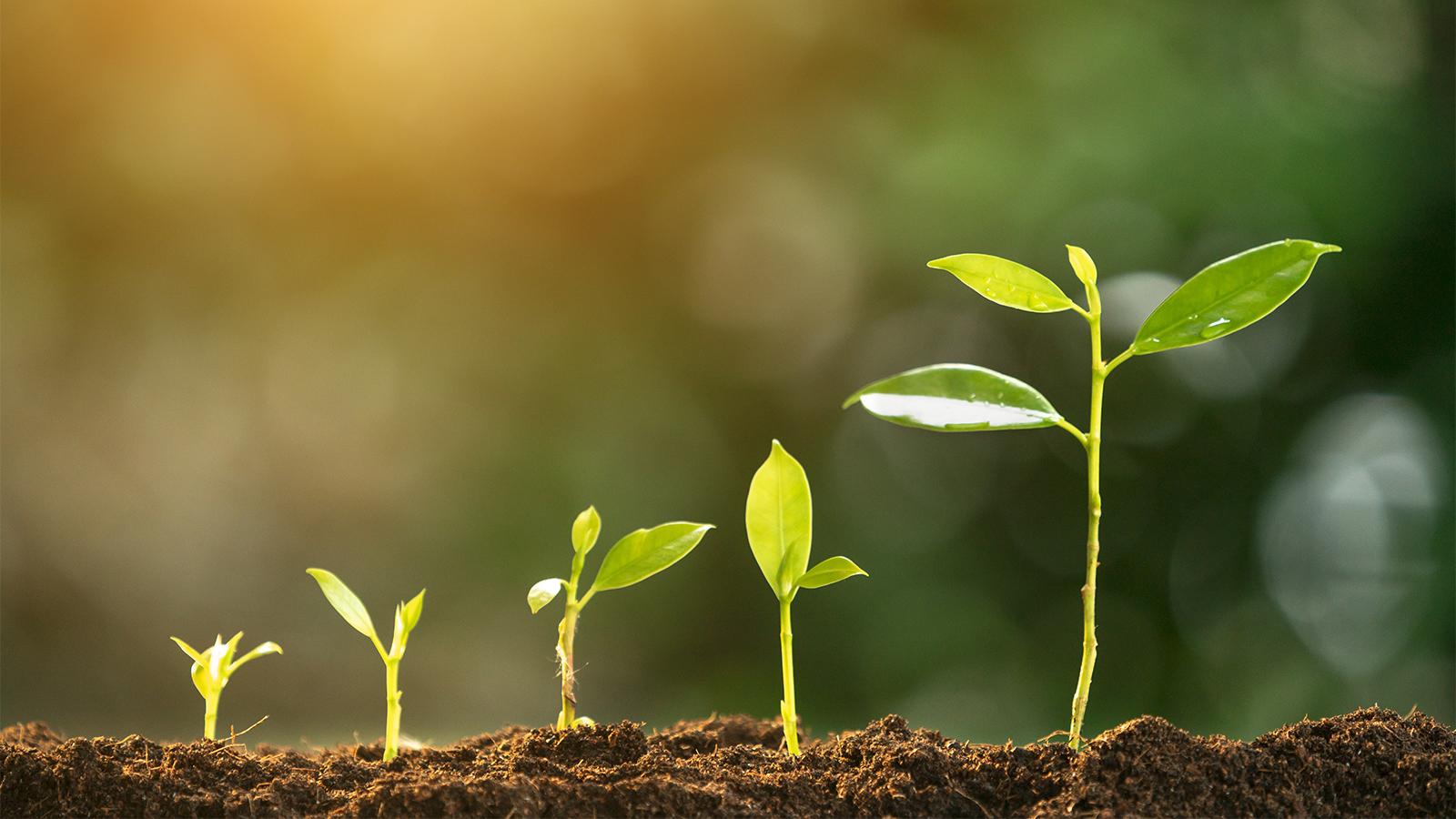 Se abre una puerta al 'rediseño' de la fotosíntesis de cultivos para  mayores rendimientos agrícolas - ChileBIO