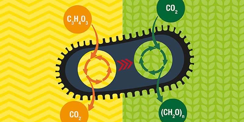 bacteria carbono