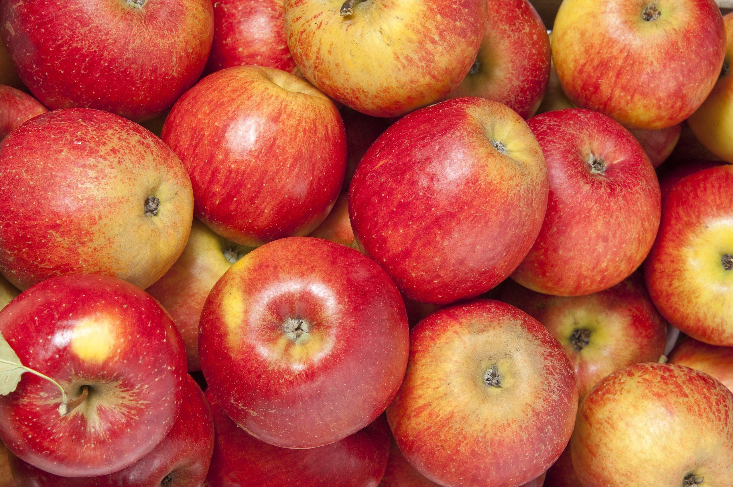 manzana roja cambio climático