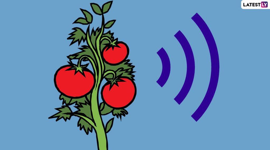 plantas emiten sonido