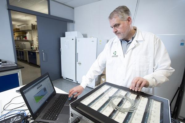 genoma canola