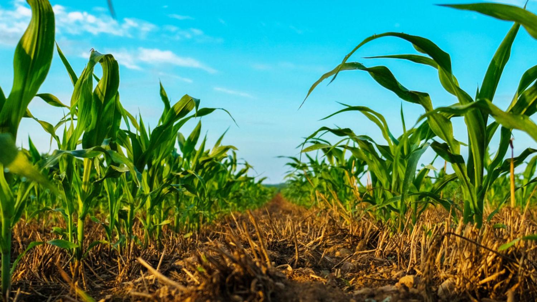 agricultura regenerativa genética