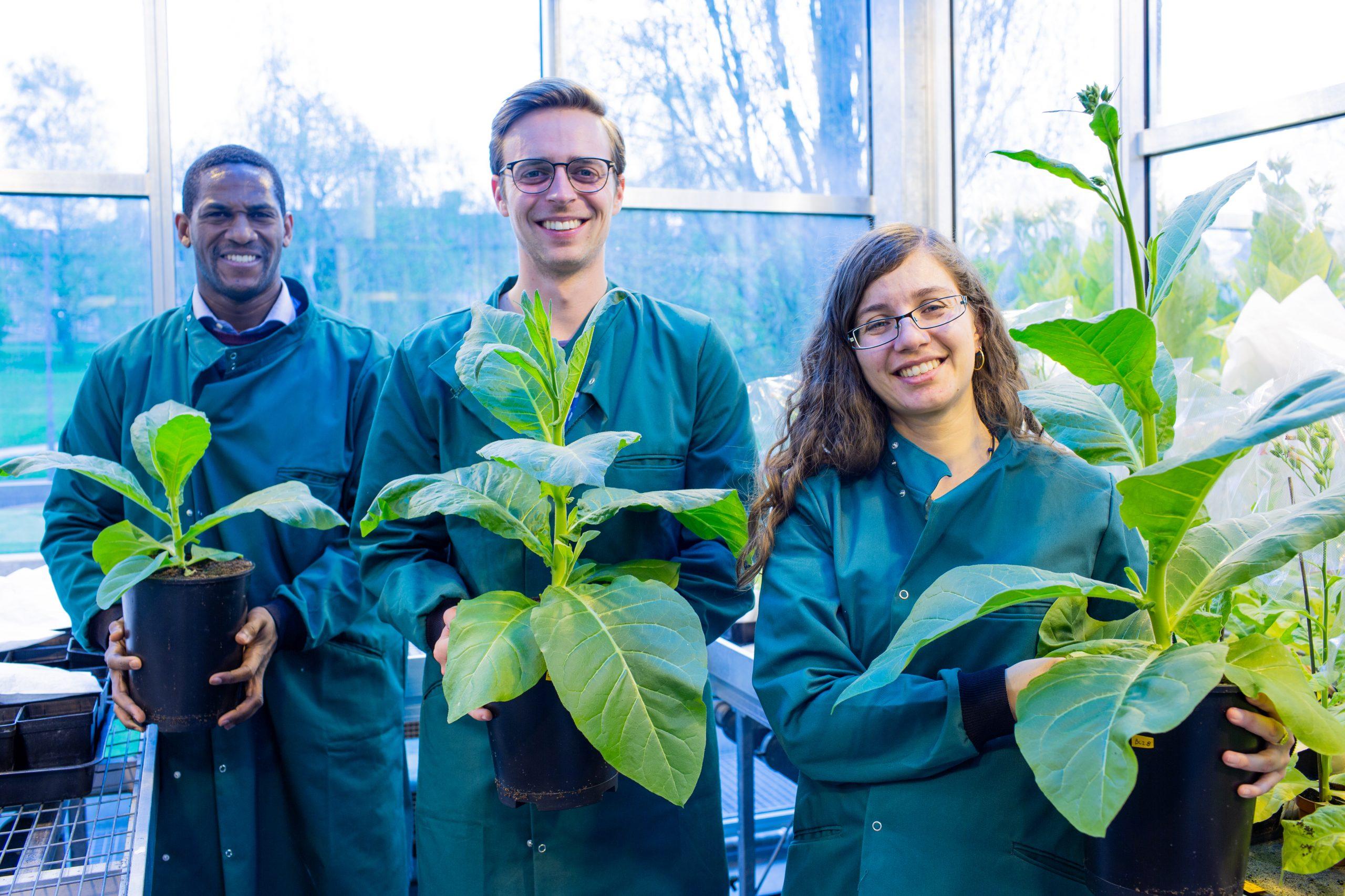 fotosintesis con genes de algas
