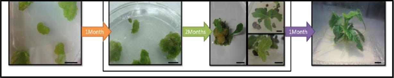 kiwi editado con CRISPR