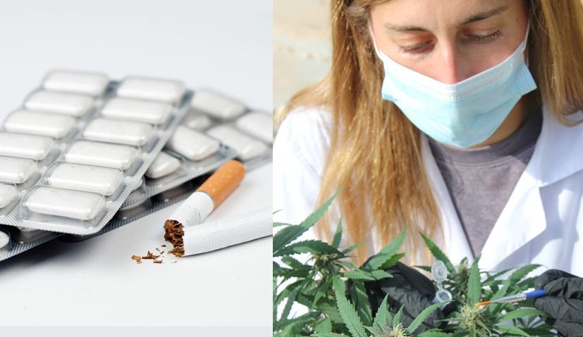 cannabis y tabaco transgénico